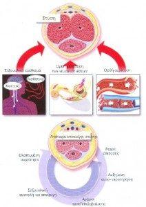 stitiki-dislitourgia-